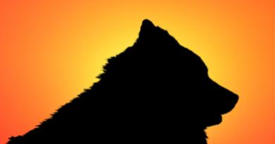 Eurasier im Sonnenuntergang